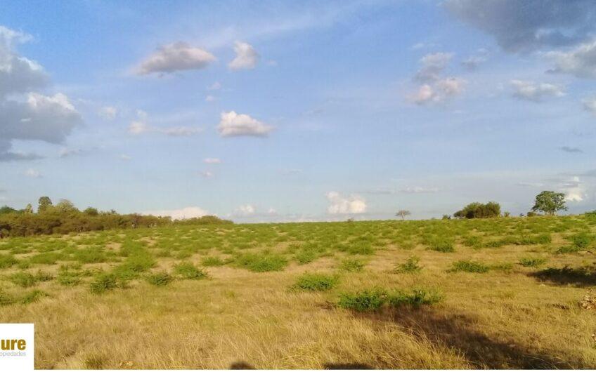 7 hectáreas o fracción.